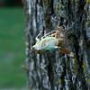 Bugs cicada locusts 1B121198