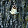 Bugs cicada locusts 1B121202