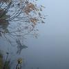 Fall Scenery 1A185033