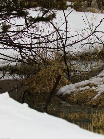 Winter Streams