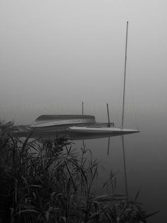B&W in the Fog