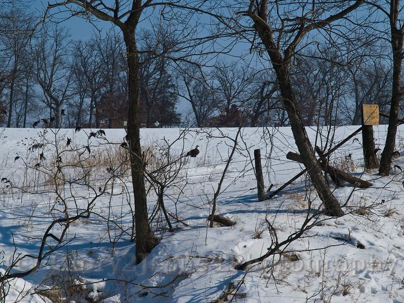 Glory 2 Jesus 4 Photography at Marshalltown Iowa-22408409