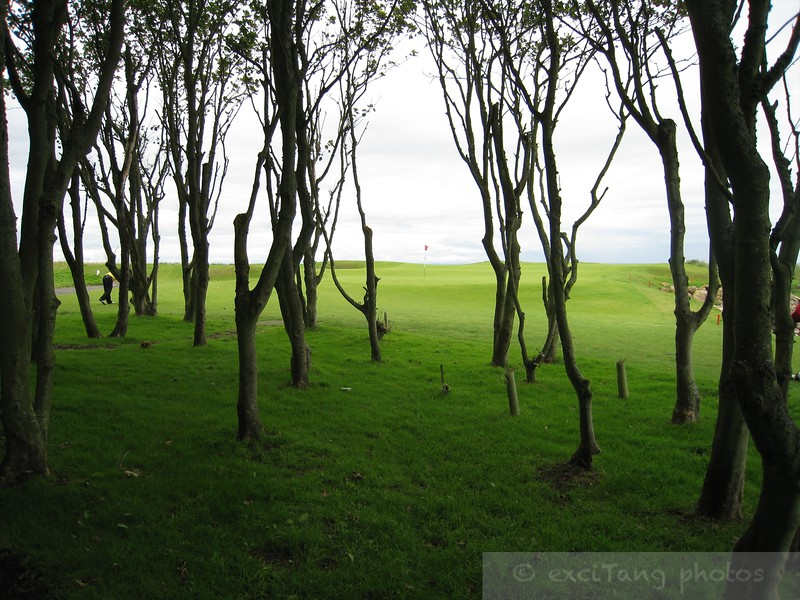 "Eerie view from Kingsbarns on a short par 3 bordering the ocean.  I managed to bounce my ball off the rock on the ocean side into these trees on the left side.  ""Lucky!"""