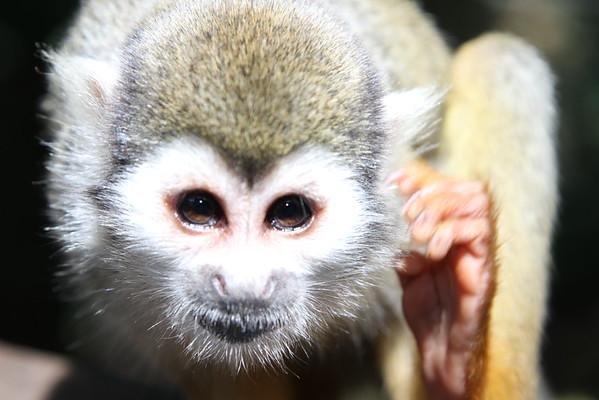 MonkeyJungle