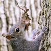 Squirrel @ Kiwanis Riverway Park - May 2017