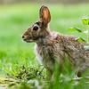Bunny @ Kiwanis Riverway Park - May 2017