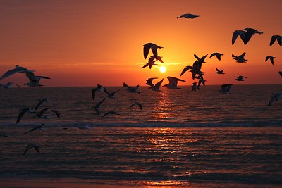 Birds flying South at sunset
