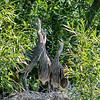 DSC_8941 heron's nest