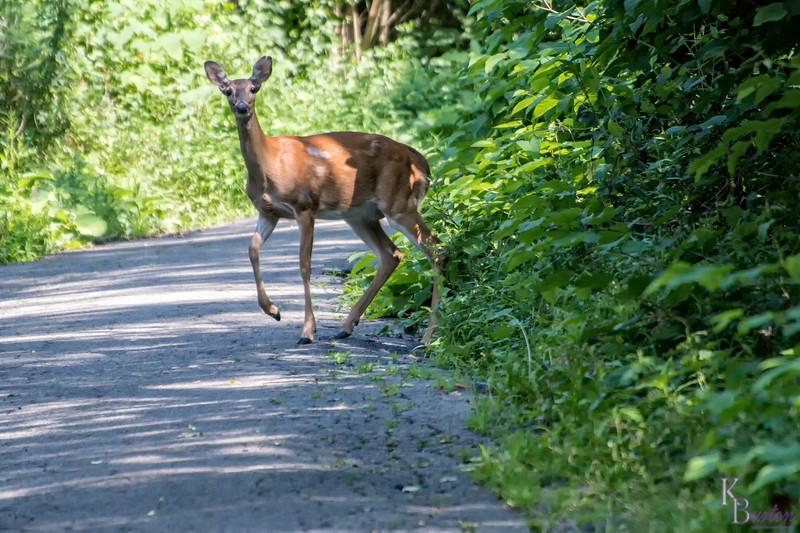 DSC_2142 deer