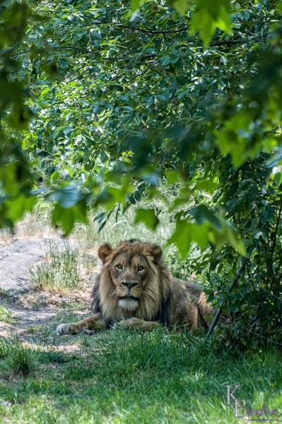 DSC_6746 lying in the bushes
