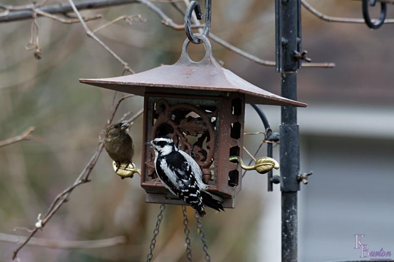 DSC_5164 backyard visitors_DxO