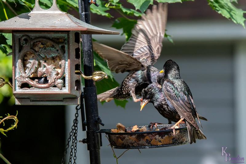 DSC_2635 backyard bird feeder