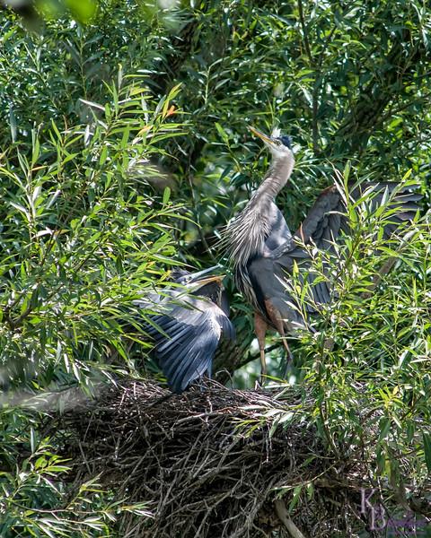 DSC_0804 heron's nest