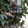 DSC_8414 backyard bird feeder