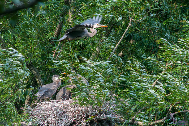 DSC_9308 heron's nest