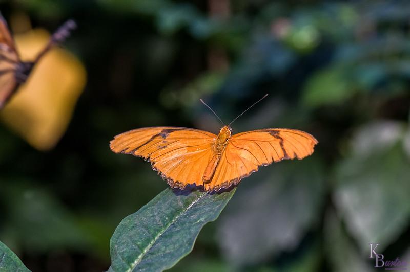 DSC_7393 scenes from Butterfly Gardens