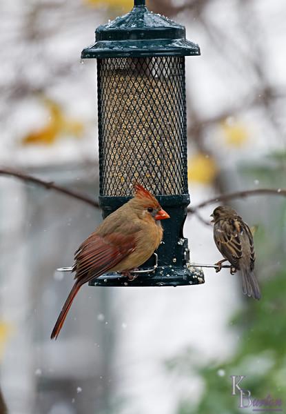 DSC_2195 backyard visitors_DxO