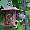 DSC_8999 catbird_DxO