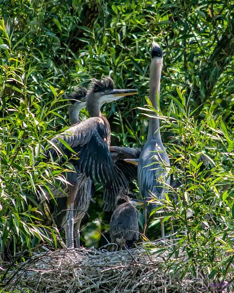DSC_9011 heron's nest