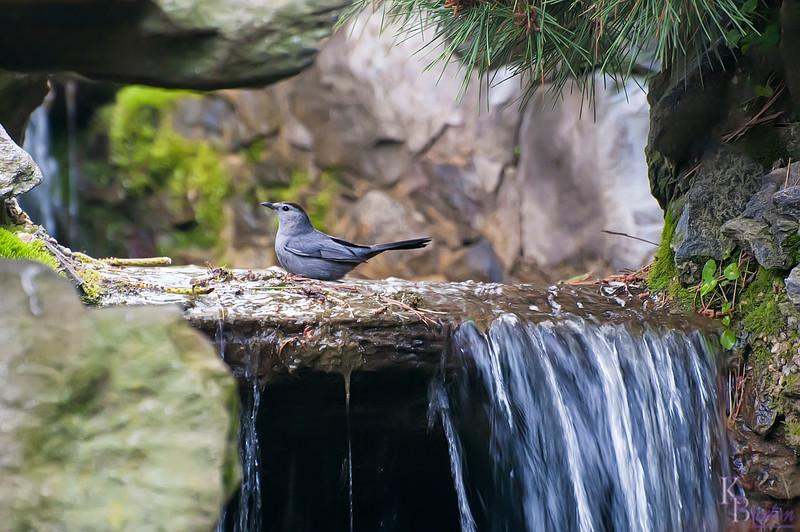"""By a waterfall I'm calling yooou ooh ooh ooooh...."""