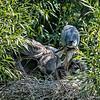 DSC_8988 heron's nest