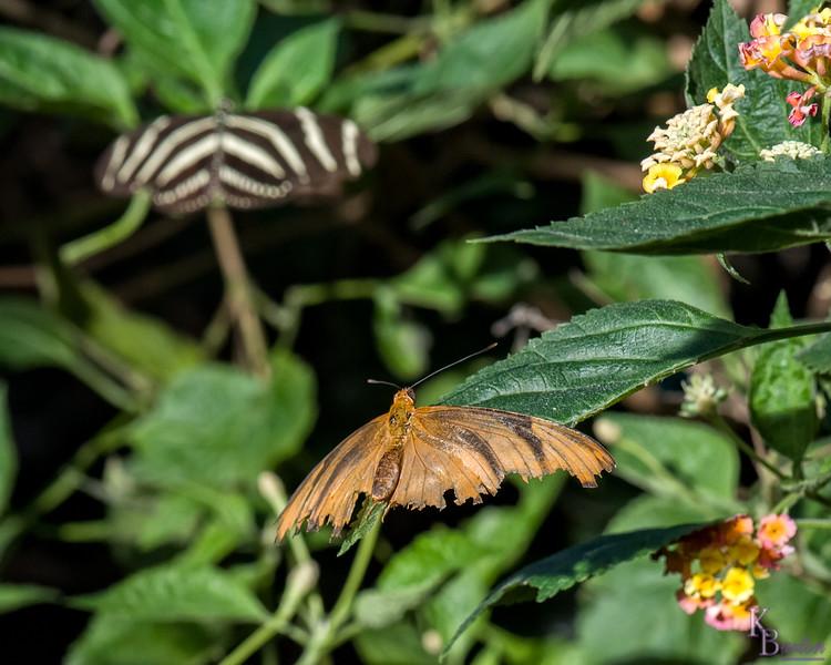 DSC_7350 scenes from Butterfly Gardens