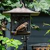 DSC_3583 backyard bird feeder