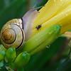 DSC_7957 snails in my garden_DxO