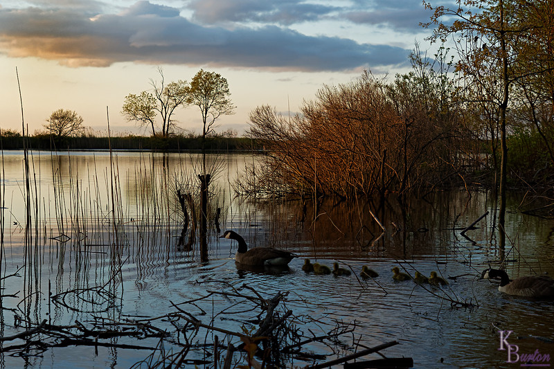 DSC_1653 dawn at Wolfe's pond_DxO