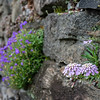 DSC_1735 rock face Dry Gardens Wave Hill
