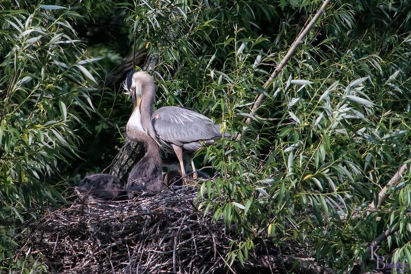 DSC_7209 heron's nest