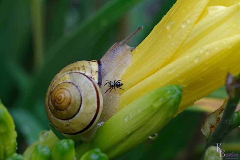 DSC_7963 snails in my garden_DxO