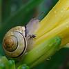 DSC_7963 snails in my garden_DxO