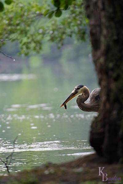 DSC_9979 rainy day at Clove lakes_DxO