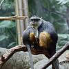 DSC_0845  Wolfe's monkey's_DxO