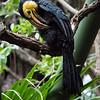 DSC_5019 toucan