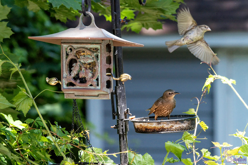 DSC_4924 backyard bird feeder
