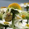 DSC_4523 a snails pace