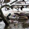 DSC_1139 winter scene at the zoo