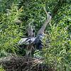 DSC_0808 heron's nest