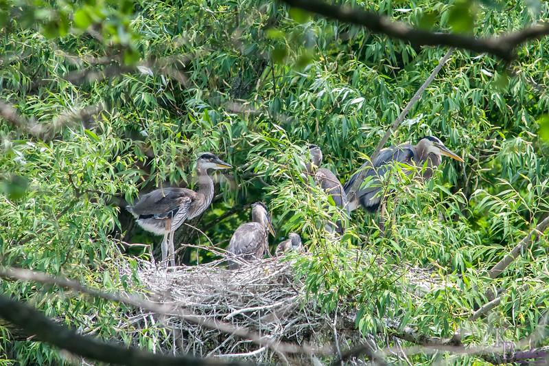 DSC_8629 nest