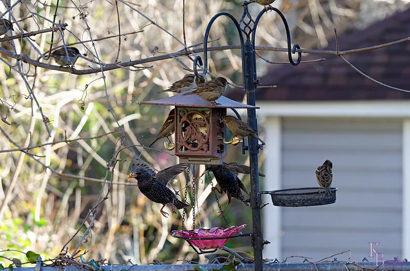 DSC_3527 backyard visitors_DxO