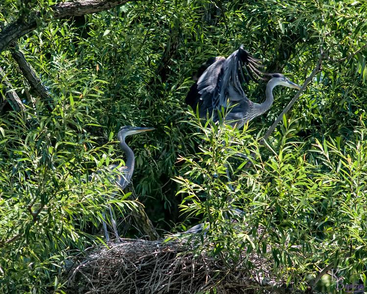 DSC_9926 heron's nest