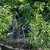 DSC_6941 heron's nest