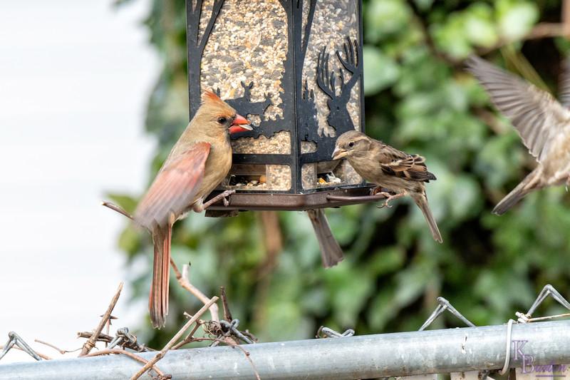 DSC_6915 backyard bird feeder