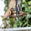 DSC_6915 backyard bird feeder