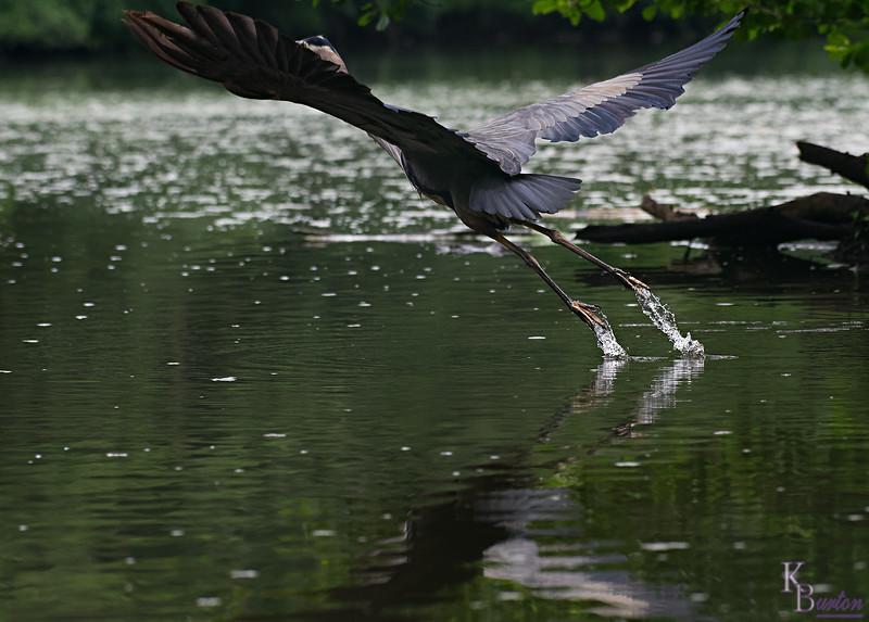 DSC_0330 rainy day at Clove lakes_DxO