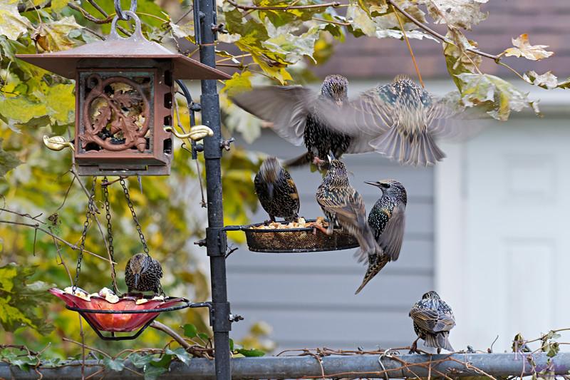 DSC_1880 backyard visitors_DxO