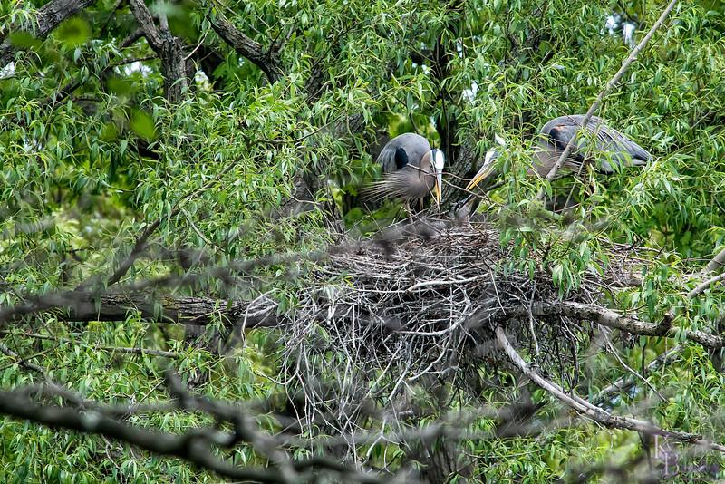DSC_7344 heron's nest