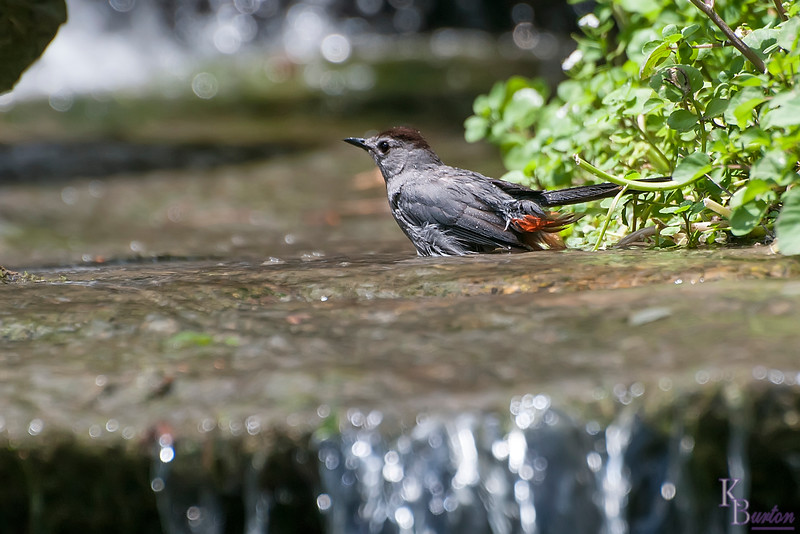 DSC_7050 nature's bird bath